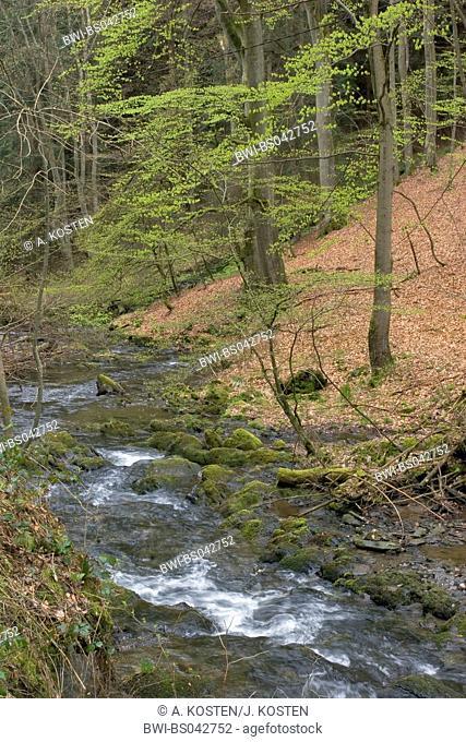 view into the valley of the Erkensruhr near Hirschrott, Germany, North Rhine-Westphalia, Nationalpark Eifel