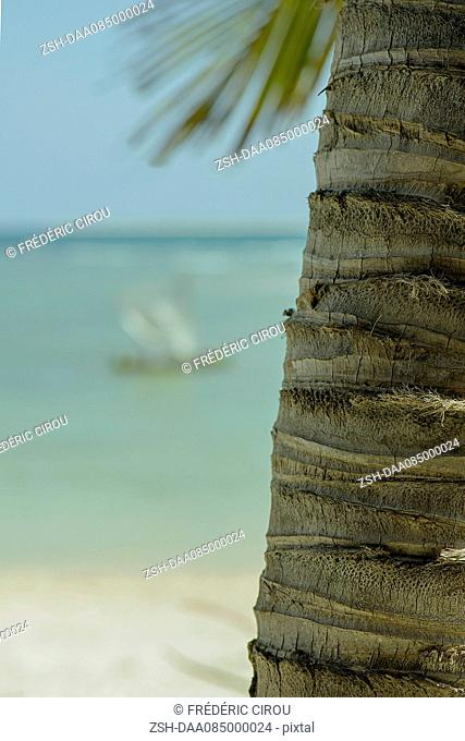 Close-up of palm tree trunk on beach