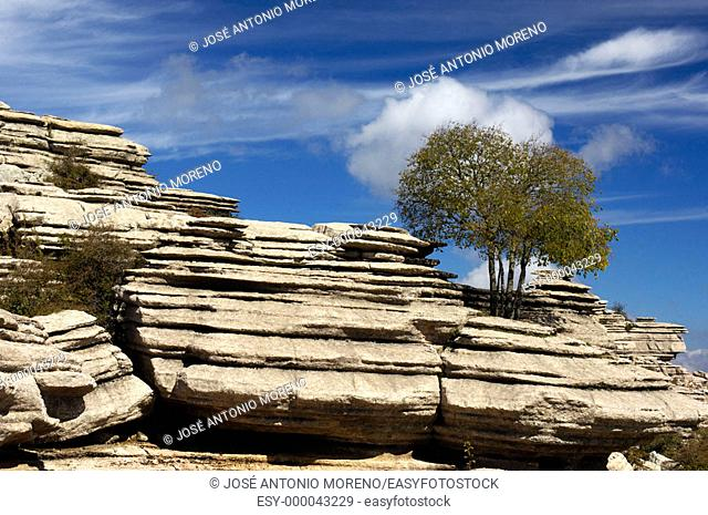 Erosion working on Jurassic limestones, Torcal de Antequera. Málaga province, Andalusia, Spain
