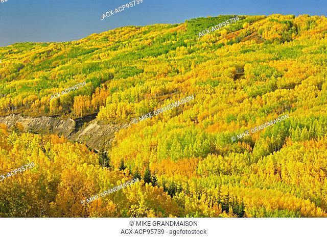 Colorful autumn foliage in hills Dunvegan Alberta Canada