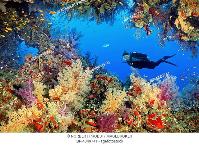 Diver observes breakthrough in coral reef, densely overgrown with various Soft corals (Alcyonacea), stone corals (Hexacorallia) and Sponge (Spongia), colorful