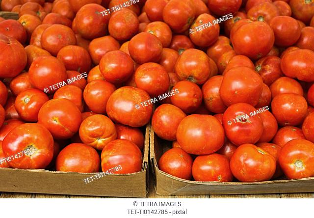 Close up of tomatoes in cardboard boxes