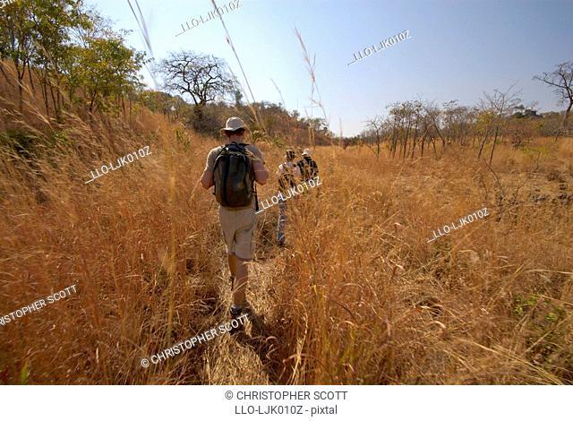 Zimbabwean volunteers trek vast distances daily in the inaugral black rhino count in Zimbabwe's Matusadona National Park, Mashonaland West province, Zimbabwe