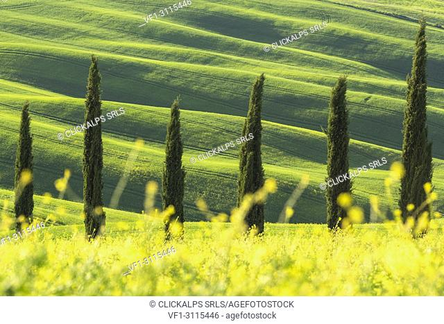 San Quirico d'Orcia,Val d'Orcia,Tuscany,Italy