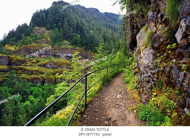 oregon, united states of america, view from the trail to mccord creek falls in columbia river gorge national scenic area