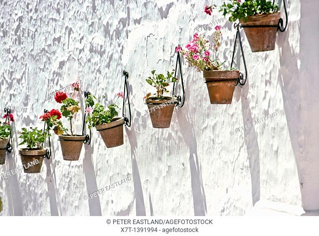 An old whitwashed wall with pots of geraniums in the village of Competa, next to the Reserva National de Sierra de Tejeda, between Malaga and Motril