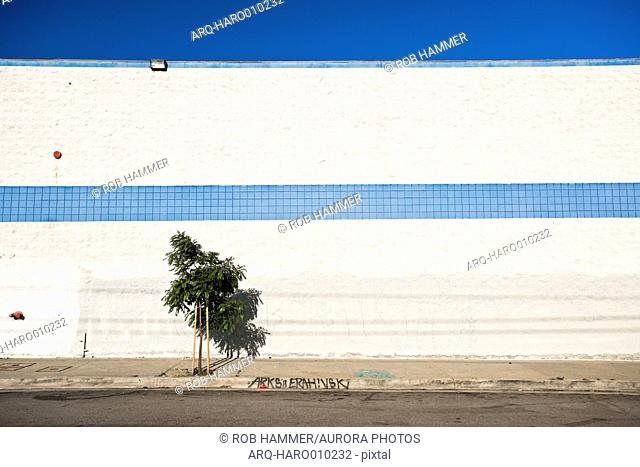 Street scene with tree against white wall with blue stripe, Los Angeles, California, USA