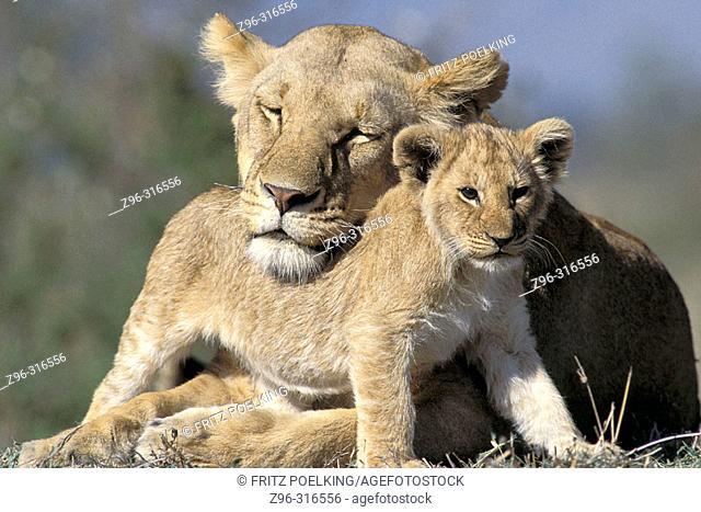 Lioness (Panthera leo) with cub. Masai Mara. Kenya