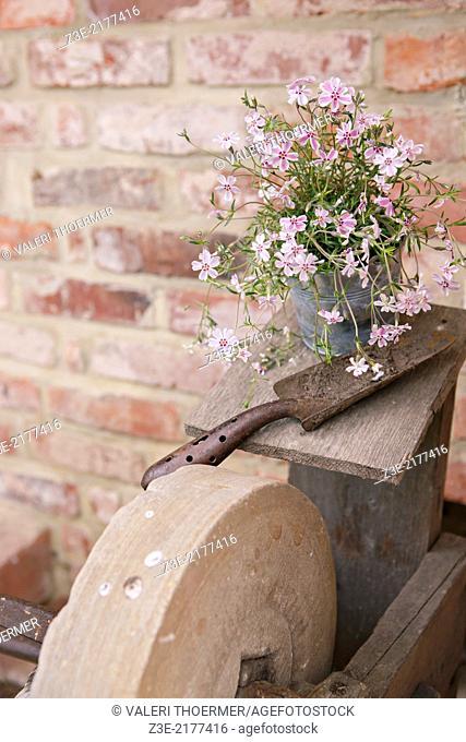 floral arrangement in the old garden, Coburg, Germany