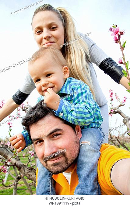 Family with toddler boy walking among blooming cherry trees , Austria
