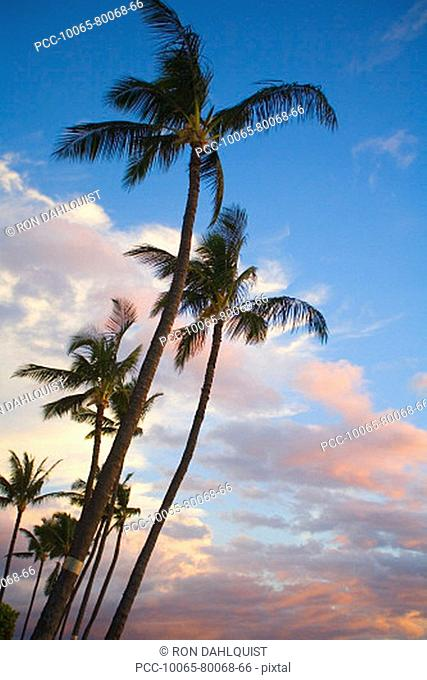 Hawaii, Palm trees with pink clouds at sunrise