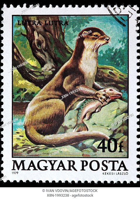 European otter Lutra Lutra, postage stamp, Hungary, 1979