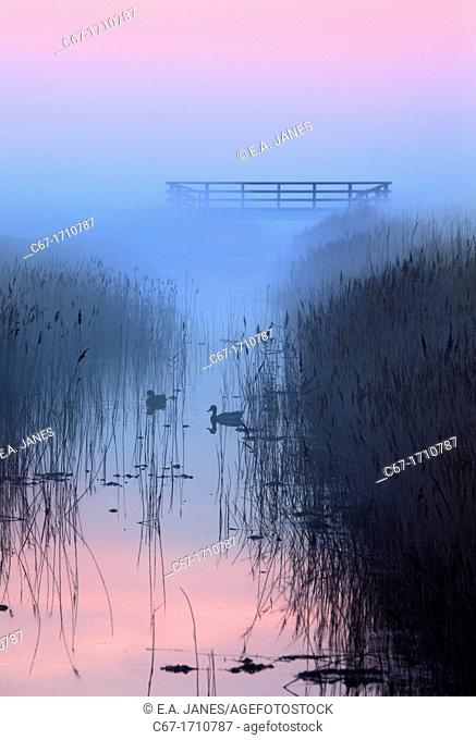 Creek and reedbeds misty evening Salthouse marshes Norfolk