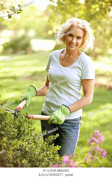 A mature woman trimming a hedge with garden shears