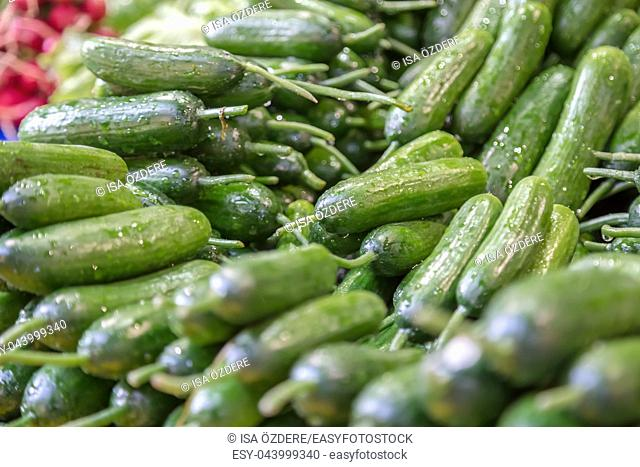 Many Green fresh cucumbers are sale on a stall at grocery food store