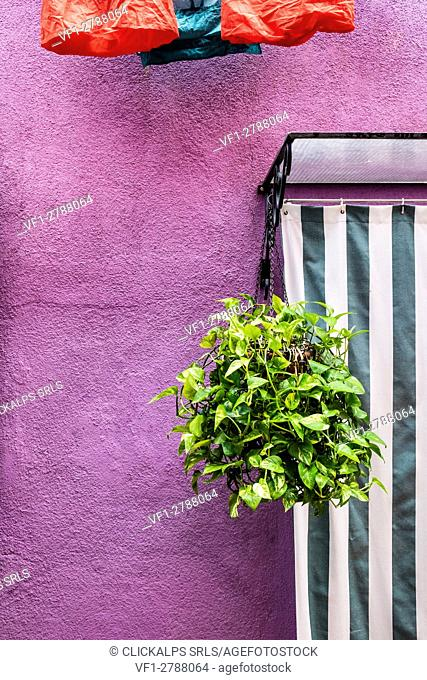 Burano, Venice, Veneto, North East Italy, Europe. Plant out to the door