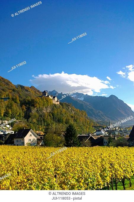 Vaduz Castle In Liechtenstein With Vineyards In Foreground