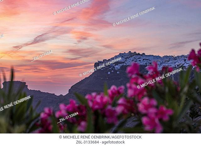 Pink flowers and Scenic overlook at sunset of the volcanic caldera at the town of Fira, Cyclades islands, Agean Sea, at the Santorini Greece