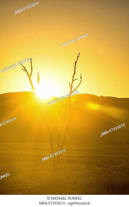 Backlight over a dead tree, giant sand Dune 45, Namib-Naukluft National Park, Namibia