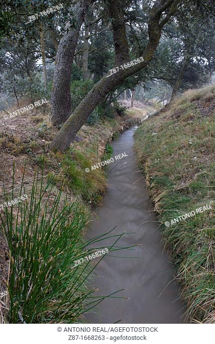 Ditch and oaks (Quercus ilex), Belen, Almansa, Albacete province, Castilla-La Mancha, Spain