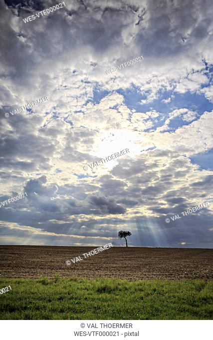 Germany, Bavaria, Coburg, rural lansdscape with a tree