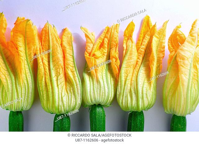 Zucchini flowers, Courgette blooms, Pumpkin flower