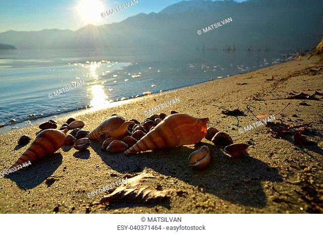 Shells on the beach with snow-capped mountains in the background at sunset