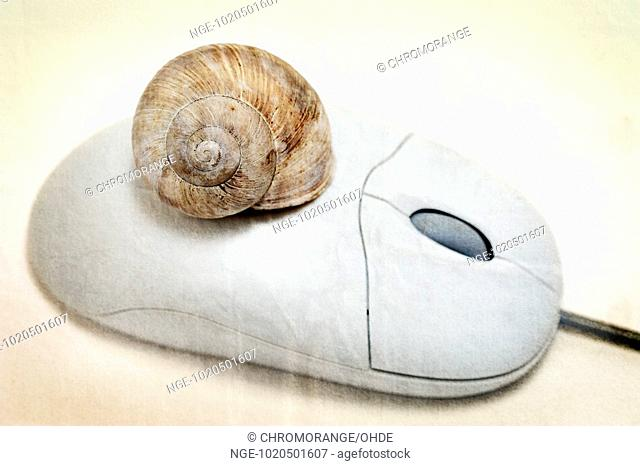 Computer mouse with snail shell
