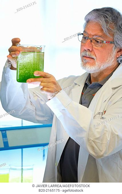 Algae culture. Algae biofuel research. Organic Laboratory. Energy and Environment Division. Tecnalia Research and Innovation. Donostia. San Sebastian