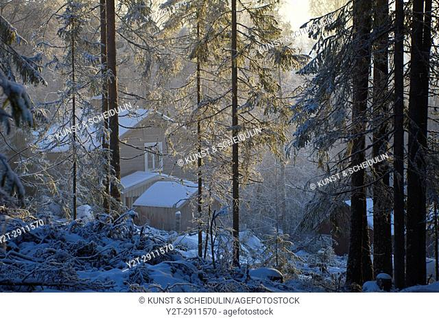 Wooden cottage in a wintry forest on a misty day. Kubbe, Västernorrland, Sweden