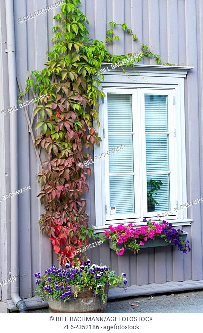 Trondheim Norway cruise Hurtigruten close up of door at colorful homes on street in city