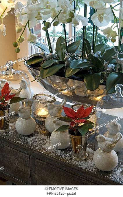 Plants and Christmas decoration in windowsill