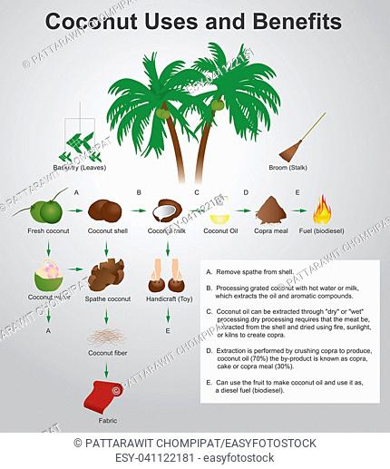 Coconut production. Coconut uses and benefits