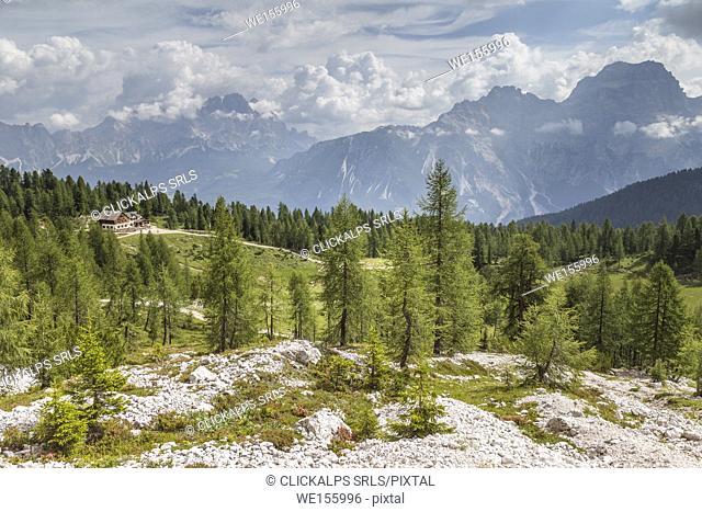 Groups of Cristallo and Sorapiss as seen from near the Croda da Lago Refuge,Cortina d'Ampezzo,Belluno district,Veneto,Italy