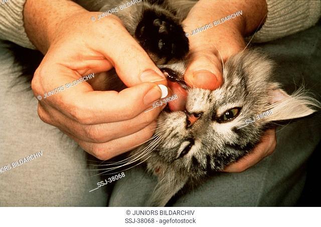 cat gets tablet