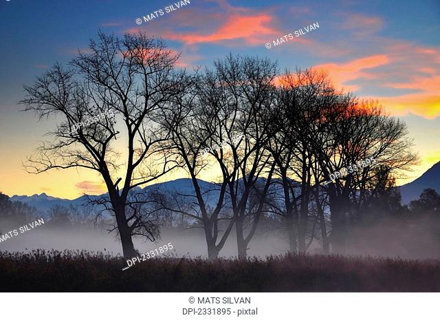 Fog over a field and trees with the alps in the background at sunset;Locarno ticino switzerland