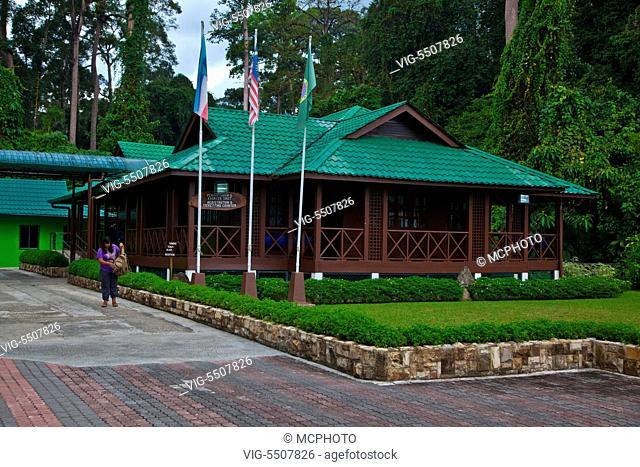 The Sepilok Orangutan Rehabilitation Center is located outside of Sandakan in the state of Sabah - MALAYSIA, BORNEO - , 03/04/2014
