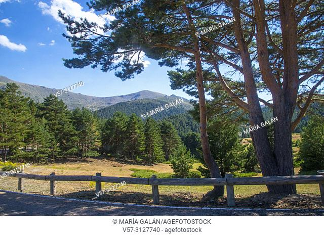 Landscape. Los Cotos mountain pass, Sierra de Guadarrama National Park, Madrid province, Spain
