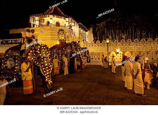 Decorated elephants, Buddhist festival Esala Perahera, Sri Dalada Maligawa or Temple of the Sacred Tooth Relic, Kandy, Central Province, Sri Lanka