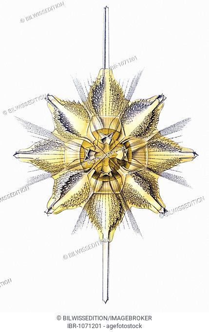 Titel Acanthometra radiolarian marine protozoa Desctiption Acanthometra / Stachelstrahlinge, Name Xiphacantha, 1/ Xiphacantha ciliata, Fam Stauracanthitidae