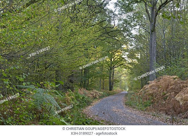 route de la Roche aux Loups, commune de Poigny-la-Foret, foret de Rambouillet, parc naturel regional de la haute vallee de Chevreuse, departement des Yvelines