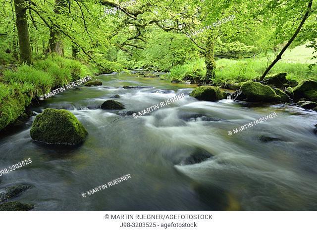 River Fowey at Golitha Falls. Golitha Falls, River Fowey, Liskeard, Cornwall, England, UK