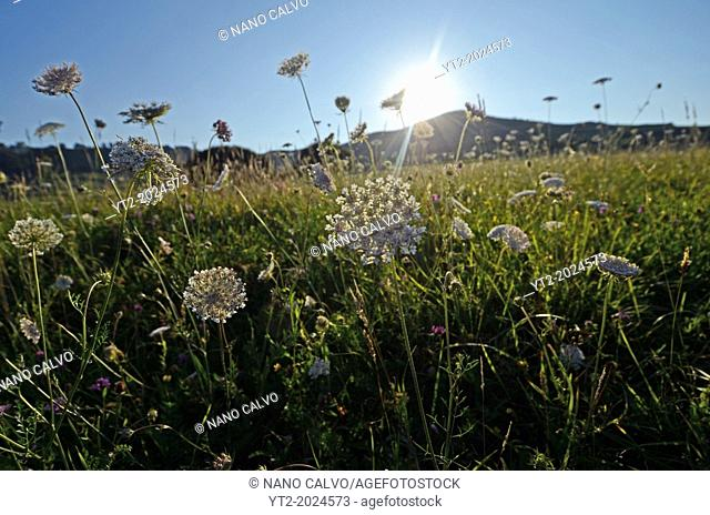 Plants and flowers in a field of Niembro, Asturias, Spain