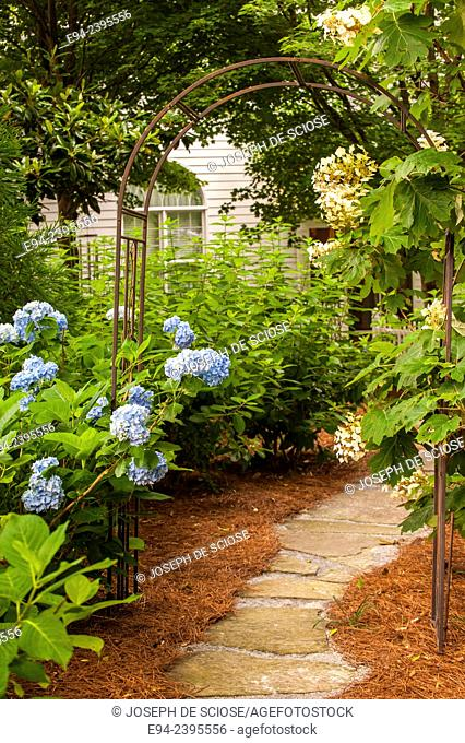 Garden path with hydrangeas. Georgia USA
