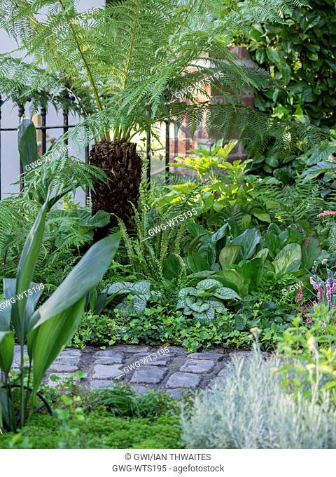 DICKSONIA ANTARCTICA UNDERPLANTED WITH HOSTA FERNS AND HEDERA