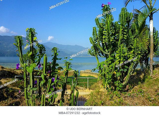 Nepal, Himalaya Mountains, Pokhara Valley, Pokhara, Phewa Lake, Plants