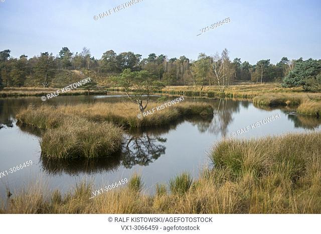 View over Dutch bog reserve De Duivelskuil, nature reserve Maasduinen, Netherlands, Europe