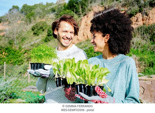 Happy couple carrying lettuce seedlings to their vegetable garden