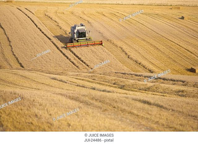 Combine harvesting wheat in sunny, rural field
