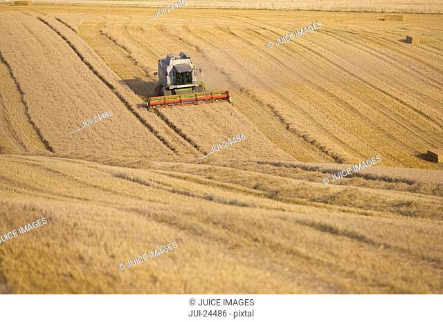 Combine harvesting wheat in sunny, rural field